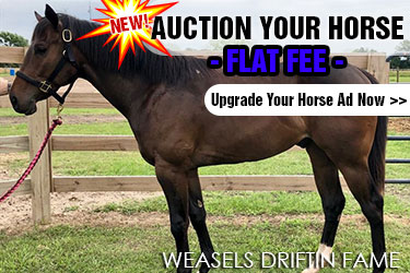 Barrel Horses for Auction